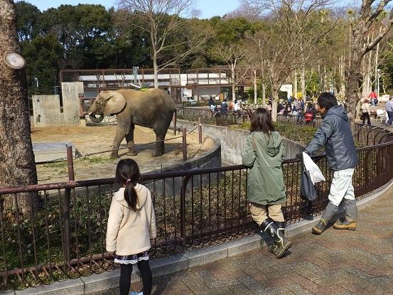 ゾウさんがつなぐ人との縁、ゾウさんはつなぐその命 _e0272869_20415734.jpg