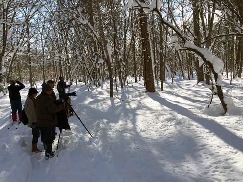 原生林をスキーで歩く・1_c0189970_11145033.jpg
