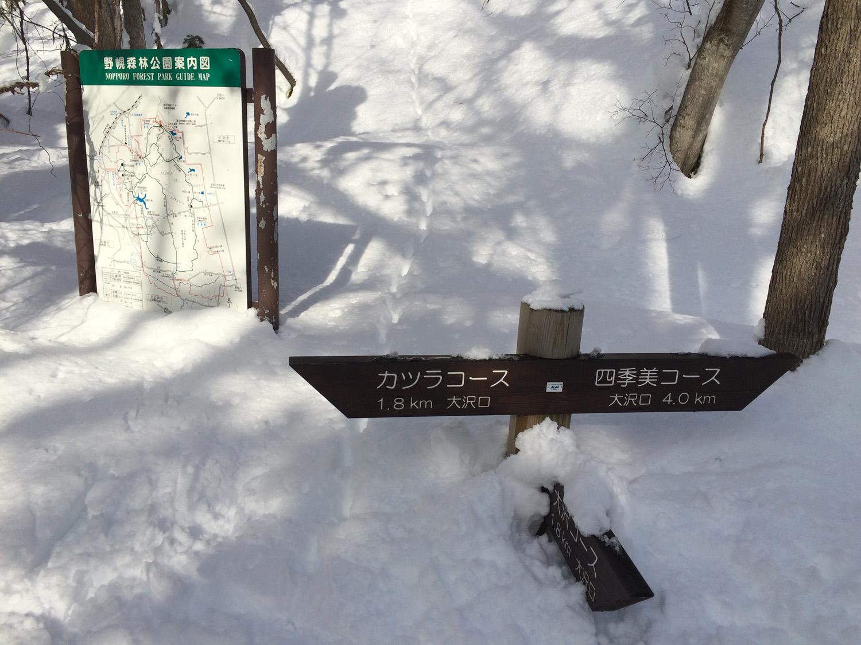 原生林をスキーで歩く・1_c0189970_1117311.jpg