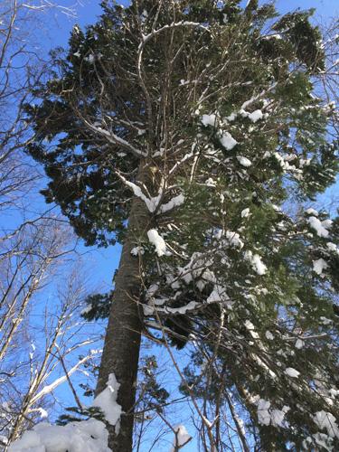 原生林をスキーで歩く・1_c0189970_11265334.jpg