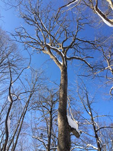 原生林をスキーで歩く・1_c0189970_11283256.jpg