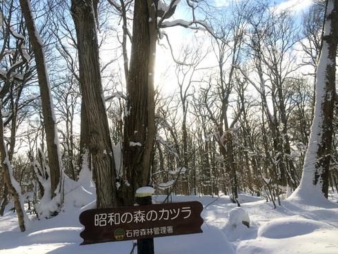 原生林をスキーで歩く・1_c0189970_11324935.jpg