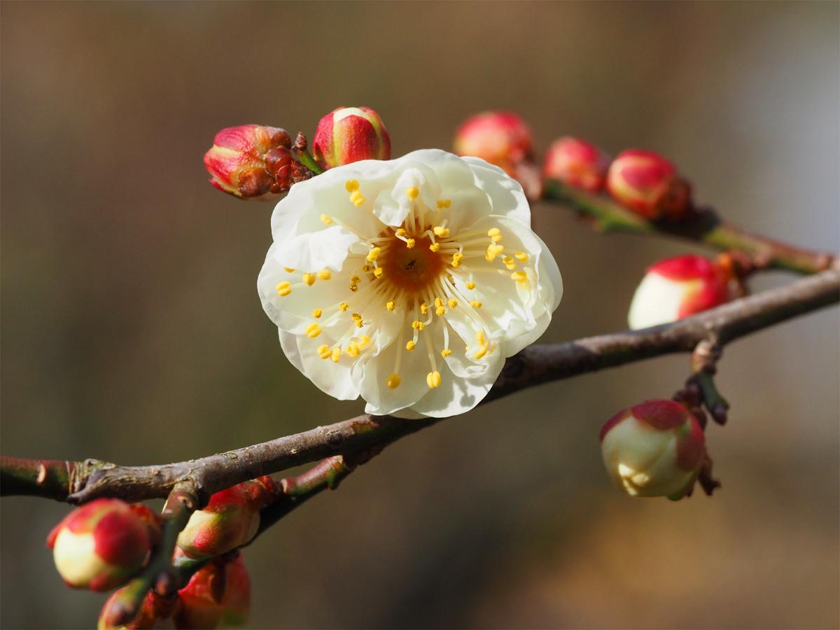 小さな春を探して_d0283373_15331769.jpg