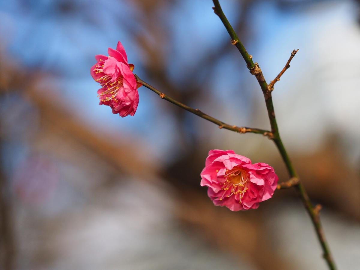 小さな春を探して_d0283373_15332510.jpg