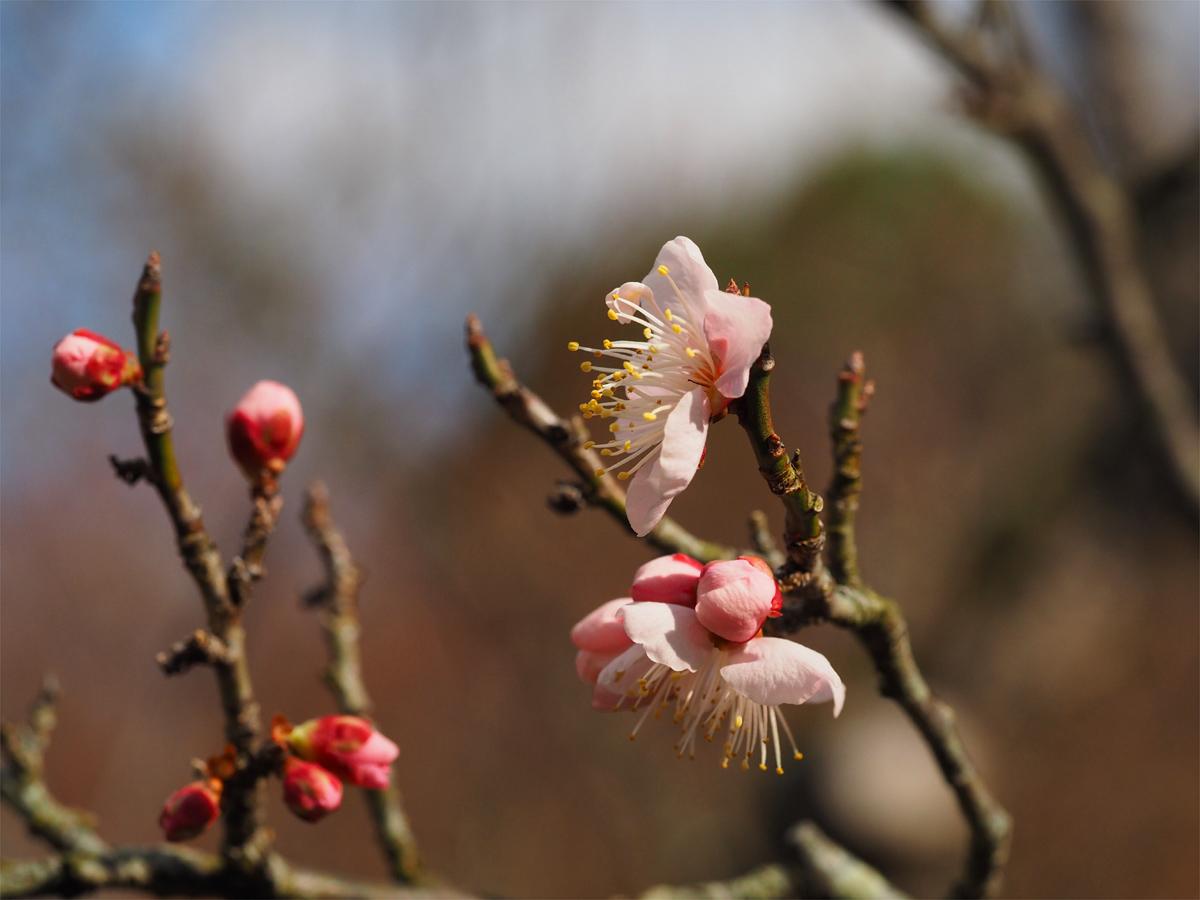 小さな春を探して_d0283373_1533821.jpg