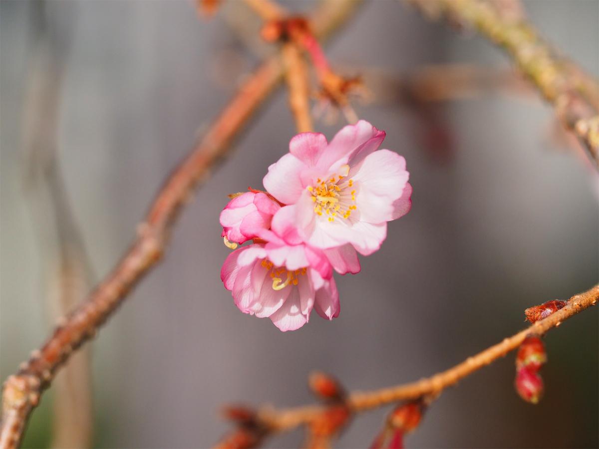 小さな春を探して_d0283373_15344146.jpg