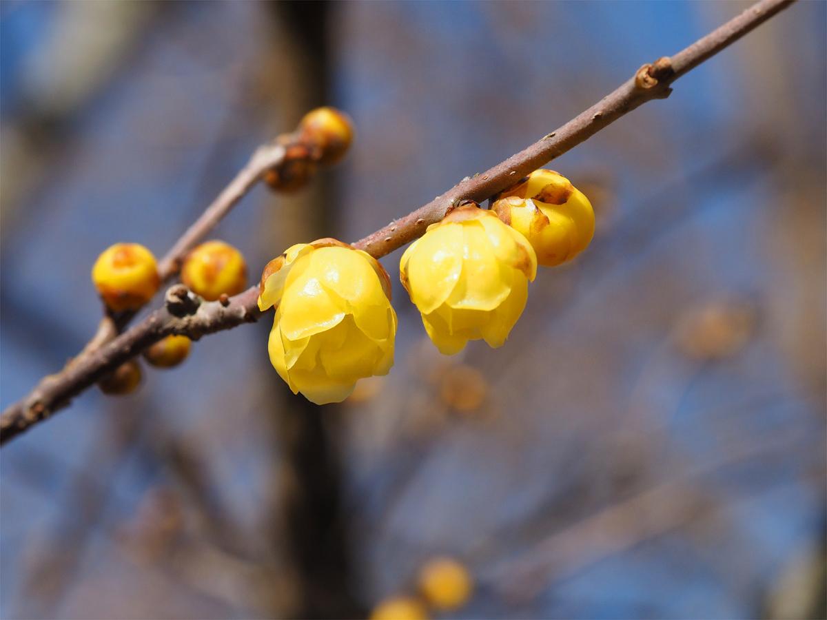 小さな春を探して_d0283373_15354040.jpg