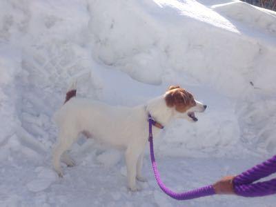 雪の中へ_c0120375_2232177.jpg