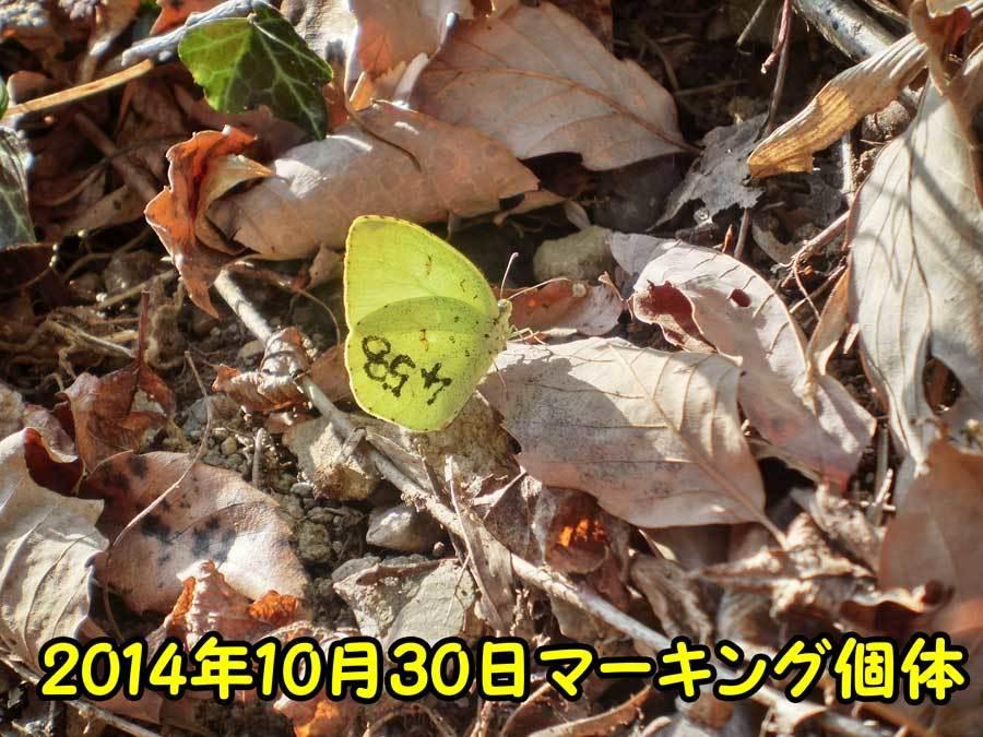 e0253104_22472295.jpg