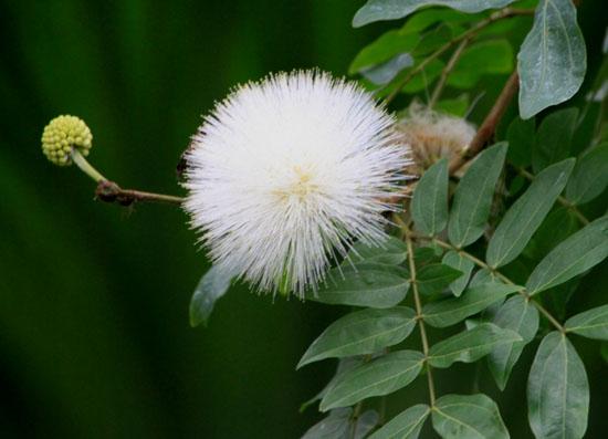 植物園で温室へ_e0048413_19463370.jpg