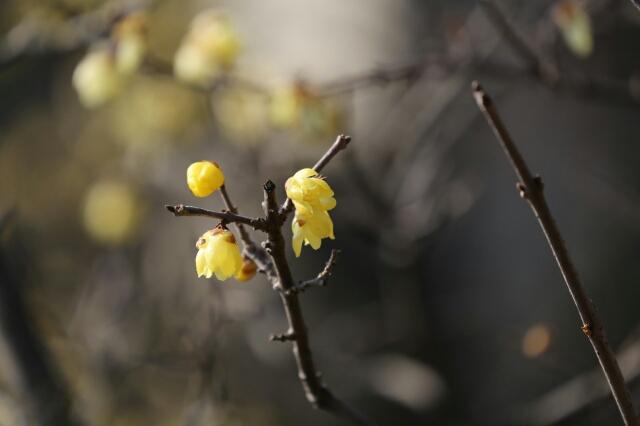 春の兆し_b0317723_1457026.jpg