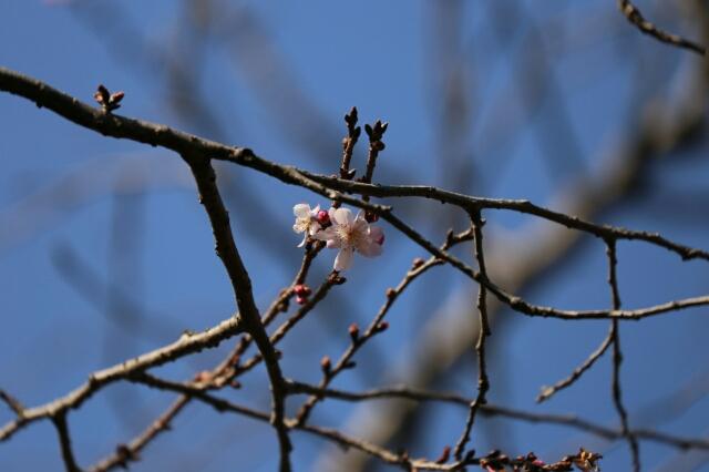 春の兆し_b0317723_14593094.jpg