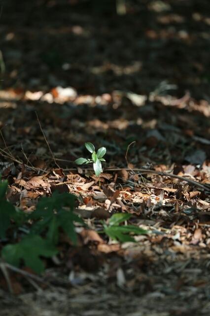 春の兆し_b0317723_15113281.jpg