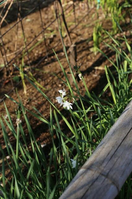 春の兆し_b0317723_1593531.jpg