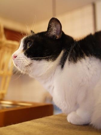 にっこり横顔猫 らぃら編。_a0143140_19285798.jpg