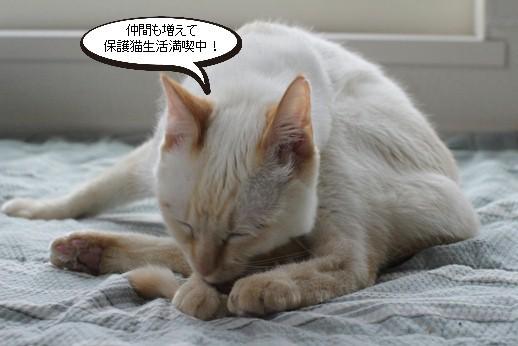 飼育崩壊猫さん達里親様募集開始します_e0151545_20553760.jpg