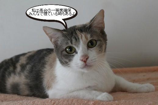 飼育崩壊猫さん達里親様募集開始します_e0151545_20560955.jpg