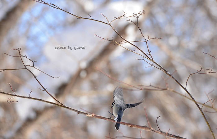 Wild birds_a0322950_2024220.jpg