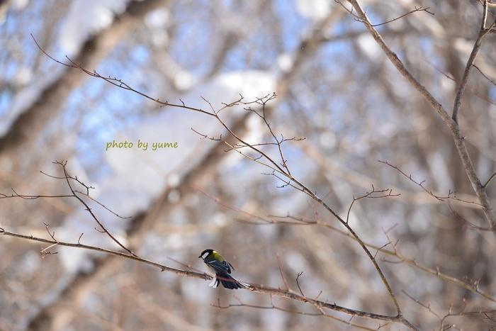 Wild birds_a0322950_2025712.jpg