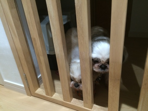 「愛犬と一緒に暮らす家」@内灘_b0112351_17481851.jpg