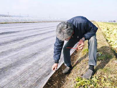 有機栽培の水田ごぼう ごぼうの発芽と水田での栽培のメリットのお話し_a0254656_1719628.jpg