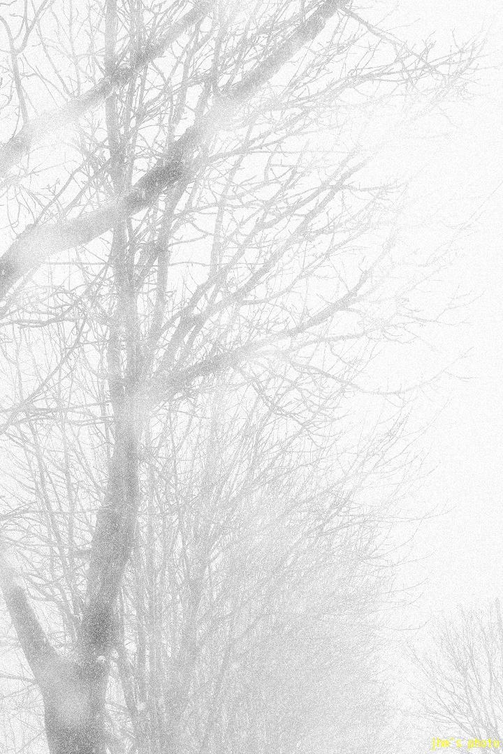 冬のデジャ・ヴ_a0158797_23301965.jpg