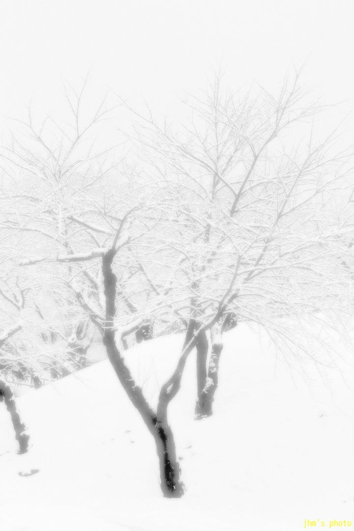 冬のデジャ・ヴ_a0158797_2331581.jpg