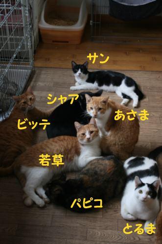 猫だけの部屋_f0242002_1114931.jpg