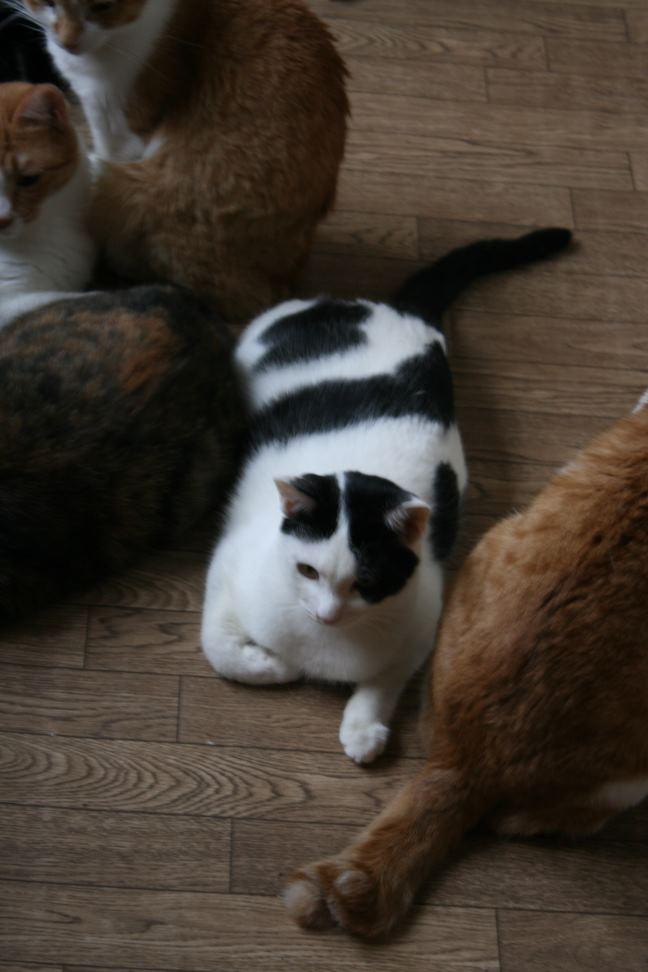 猫だけの部屋_f0242002_22573986.jpg
