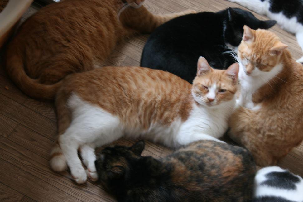 猫だけの部屋_f0242002_22591758.jpg