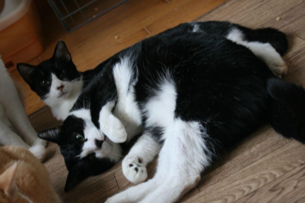 猫だけの部屋_f0242002_2317254.jpg