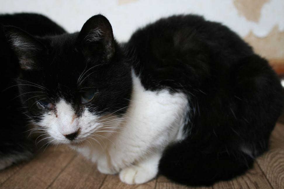 猫だけの部屋_f0242002_23194054.jpg