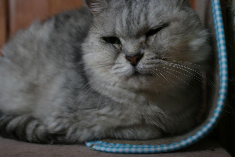 猫だけの部屋_f0242002_23334454.jpg