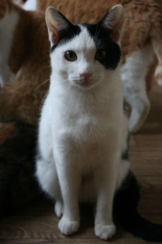 猫だけの部屋_f0242002_23395546.jpg