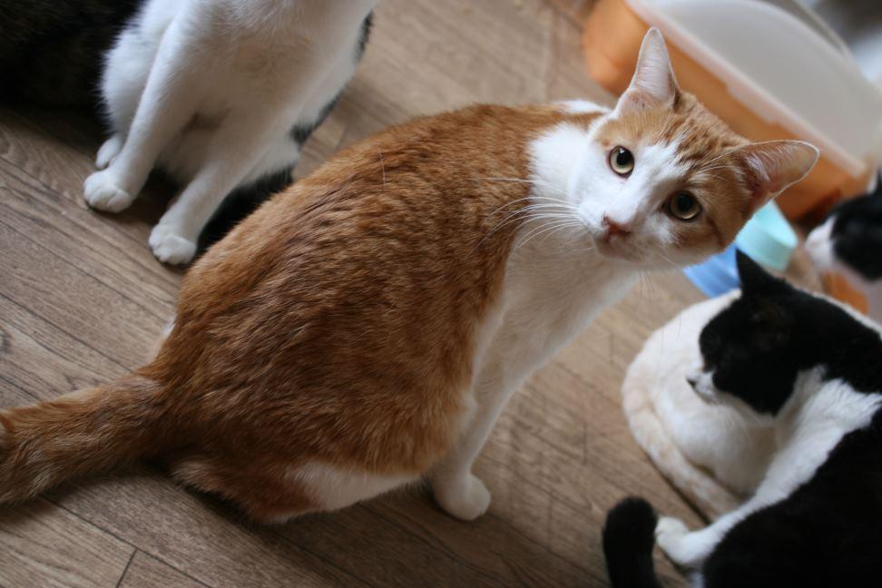 猫だけの部屋_f0242002_2382620.jpg