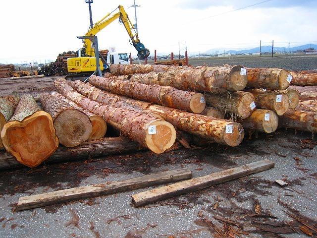 長浜市の自伐型林業展開スタート_e0002820_22195039.jpg