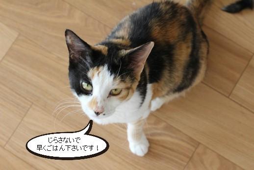 今日の保護猫さん達_e0151545_20251778.jpg