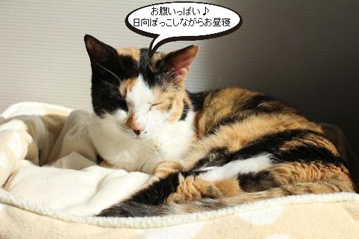 今日の保護猫さん達_e0151545_20252711.jpg