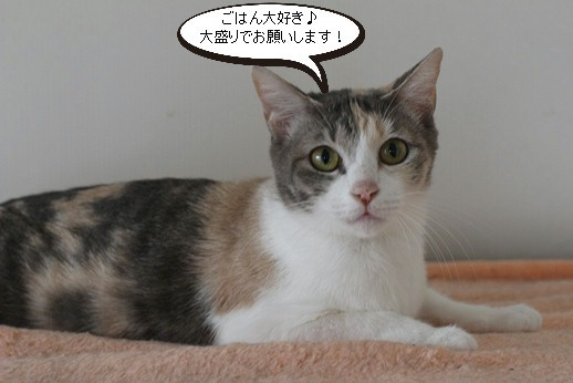 今日の保護猫さん達_e0151545_20261736.jpg