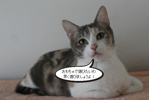 今日の保護猫さん達_e0151545_20264064.jpg