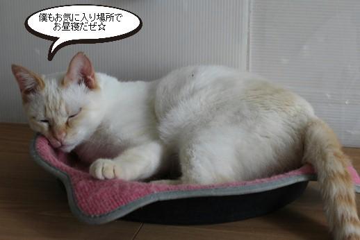 今日の保護猫さん達_e0151545_20275120.jpg