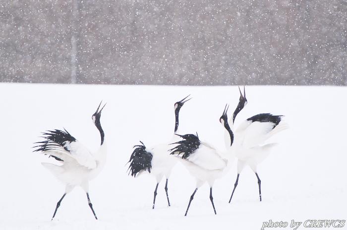 風雪の給餌場/北海道鶴居村_e0056449_20382246.jpg