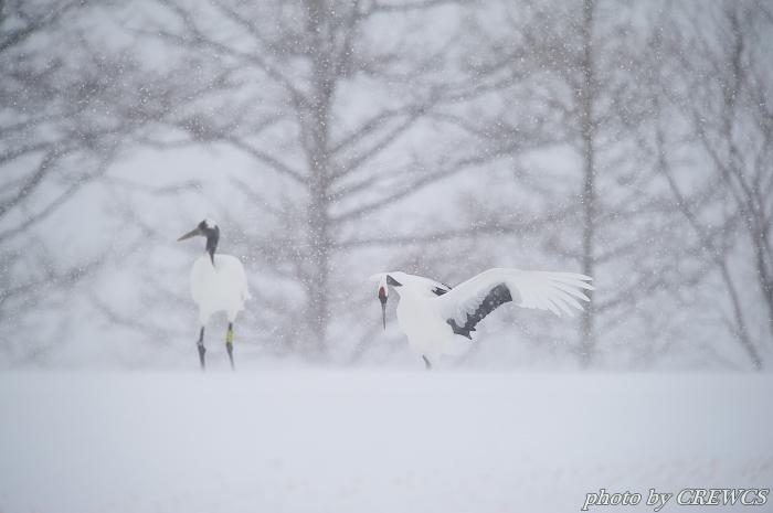 風雪の給餌場/北海道鶴居村_e0056449_20385311.jpg