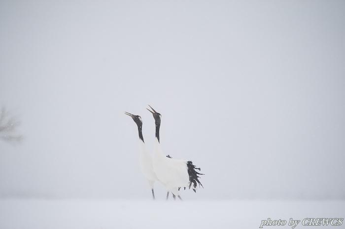 風雪の給餌場/北海道鶴居村_e0056449_20423216.jpg