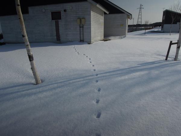 雪の八雲_e0270550_1430778.jpg