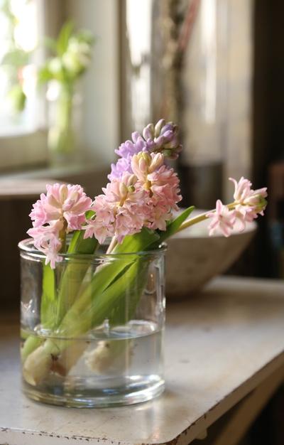 春いっぱい。。。_a0229658_9181122.jpg