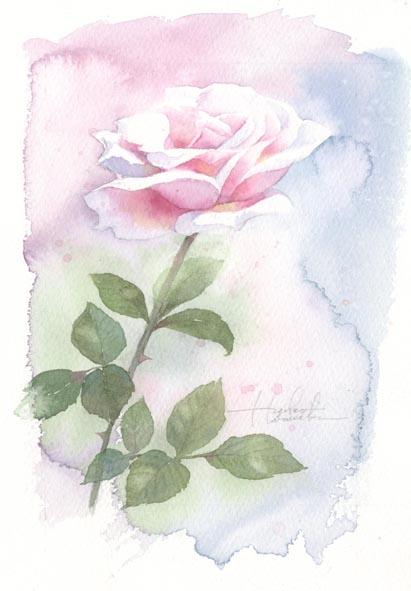 薔薇01_f0176370_17475037.jpg