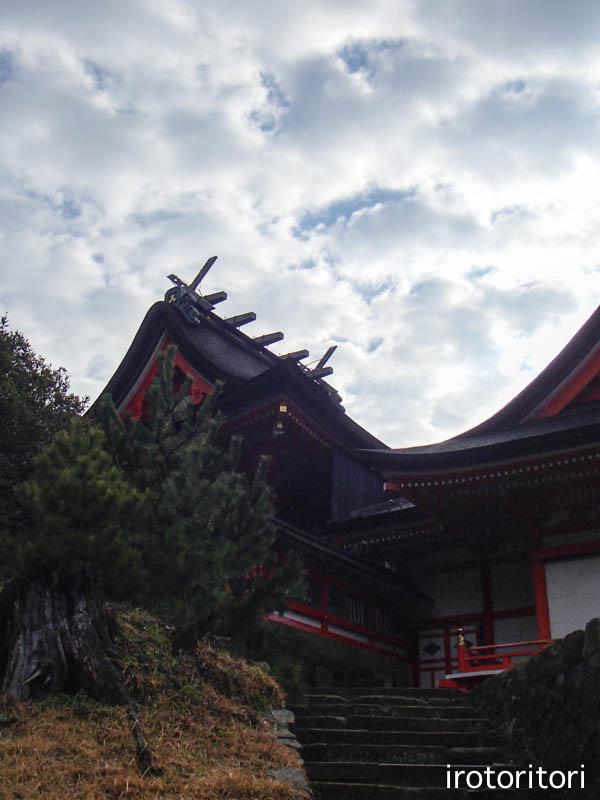 旅日記 その4  (ウミネコ)  2014/01/24_d0146592_011189.jpg