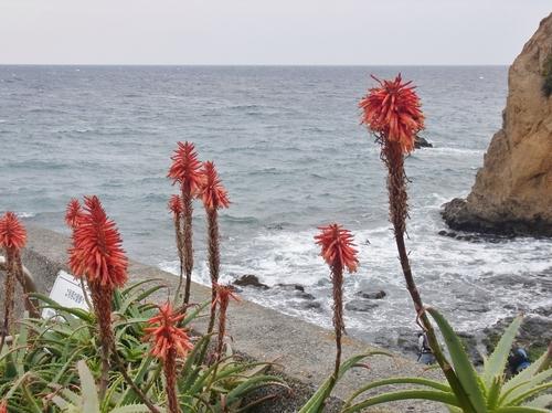 海はいいなあ~♪_b0105897_102114.jpg