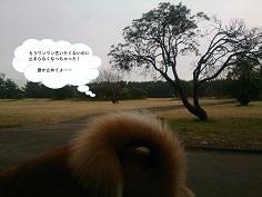 c0315313_22333591.jpg